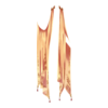 https://www.eldarya.ru/static/img/item/player/icon/00e8b2a0fd3d70e5f68fcc70469f21c6.png